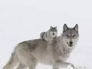 """母狼(可以影响你一生的故事)"""""""